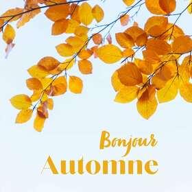 Bel automne à tous ! 🍁  Quel bonheur d'arriver dans cette sublime saison. À nous les odeurs de forêt, les veloutés de légumes, les feux de bois et bien sûr, les infusions à tout va !  Et vous, qu'aimez-vous le plus en automne ?  #piemontcevenol #saintjeandugard #brionnais #gardtourisme #terracina #terracina_france #fabricationfrançaise #slowlife #ecofriendly #bougie #bougievegetale #bougieartisanale #infusion #plantesfrancaises #infusionaddict #tisane #marqueethique