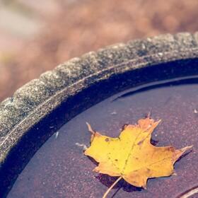 Notre top 5 des plaisirs automnales, à retrouver sur notre blog Terramag :  #1 les balades emmitouflées #2 se réchauffer autour d'une boisson chaude #3 Le retour de la comfort food #4 Aménager son cocon #5 Diffuser des senteurs automnales  Et vous, quels sont vos petits plaisirs de l'automne ?  #terracina #terracina_france #fabricationfrançaise #slowlife #ecofriendly #bougie #bougievegetale #bougieartisanale #infusion #plantesfrancaises #infusionaddict #tisane #marqueethique #piemontcevenol #saintjeandugard #anduze #gardtourisme #cévennes